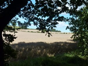 Photograph of fields and trees in the north of the Parish before the developers got hold of it now its sadly just a view of house