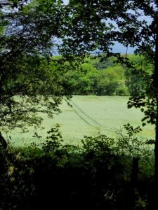 Photograph showing fa field through trees in the south east of the Parish
