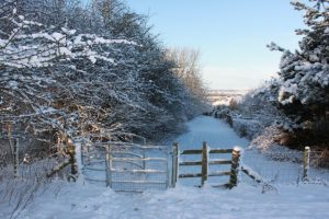 Photograph of Coxhoe Woods in winter with snow taken in the bad winter on 2010. there are some gates between trees.