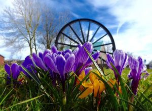 Photograph taken from ground level of the Pit wheel located on the southern village green with blue and yellow crocus in the foreground.