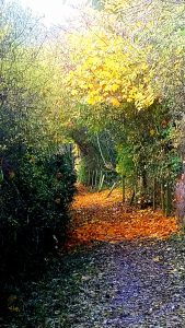 Autumn scene on Parsons Walk. By Lynn Barlow