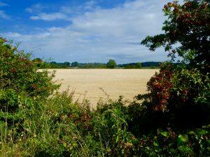 View across fields really blue sky