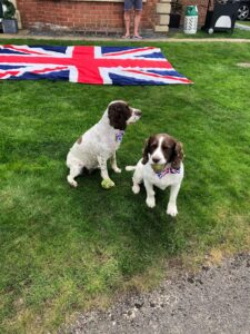 Photograph of dogs with union jack dickie bows
