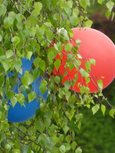 blue and red balloons in a tree