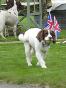 Photograph of dog sporting union jack colours