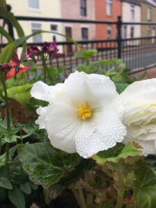 Photo of white flower