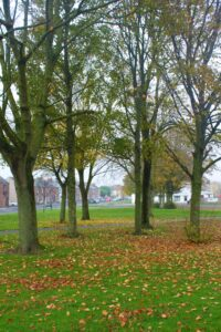 Autumn Village Green with trees and fallen leaves